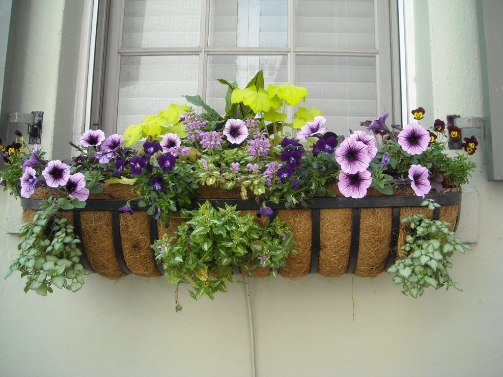 flowers and window boxes to add curb appeal